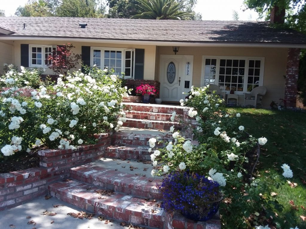 Landscaping Orange County Tree Service Commercial Maintenance Installs